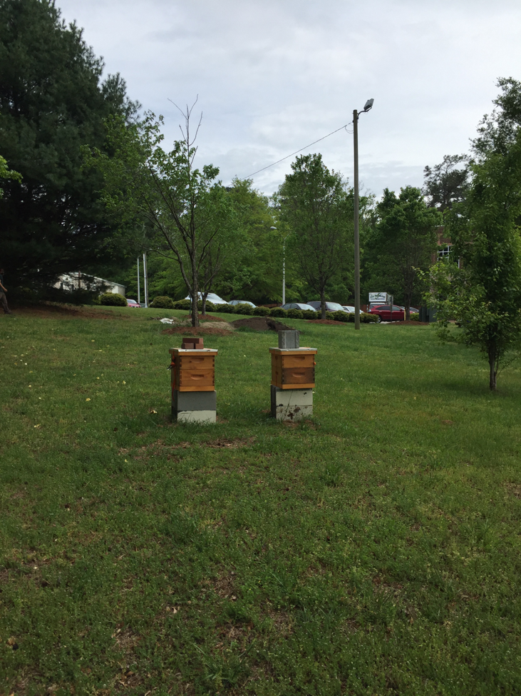 Beehives in the yard